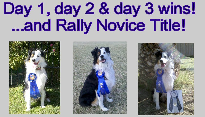 SUNNY winning his first title RALLY NOVICE TITLE!