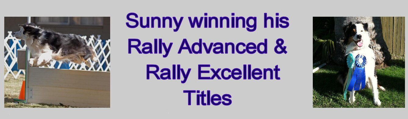 SUNNY has his RALLY EXCELLENT TITLE!